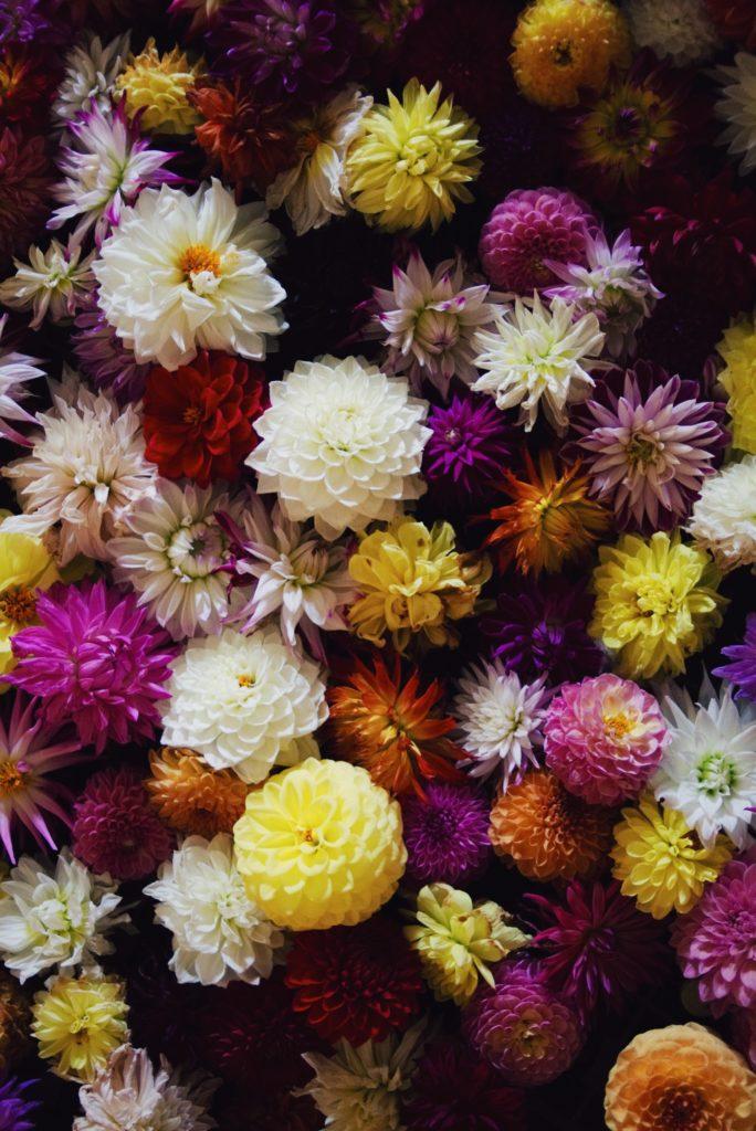 dalie, kwiaty na ślub, oprawa florystyczna